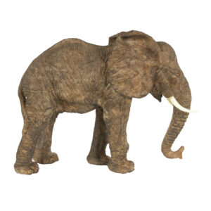 פיל בינוני