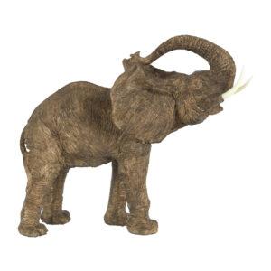 פיל גדול
