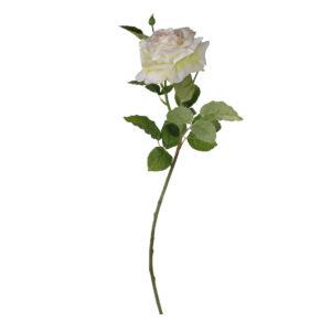 ורד קרם