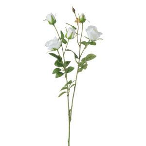 ענף ורדים קטנות